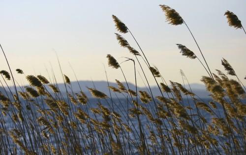 vento-sul-lago-ce8504a2-3807-4410-981e-c224d310d6de