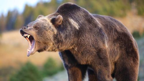 urs-atac-raget